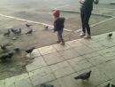 Дима и голуби.
